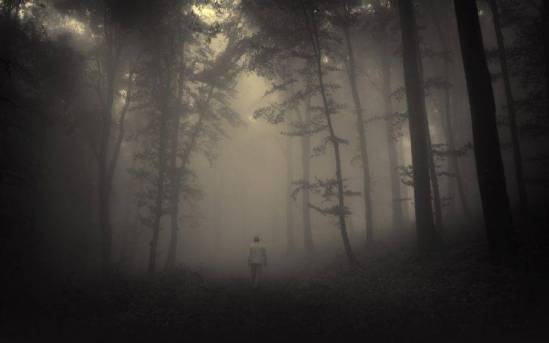 326247-forest-spooky-mist-748x468